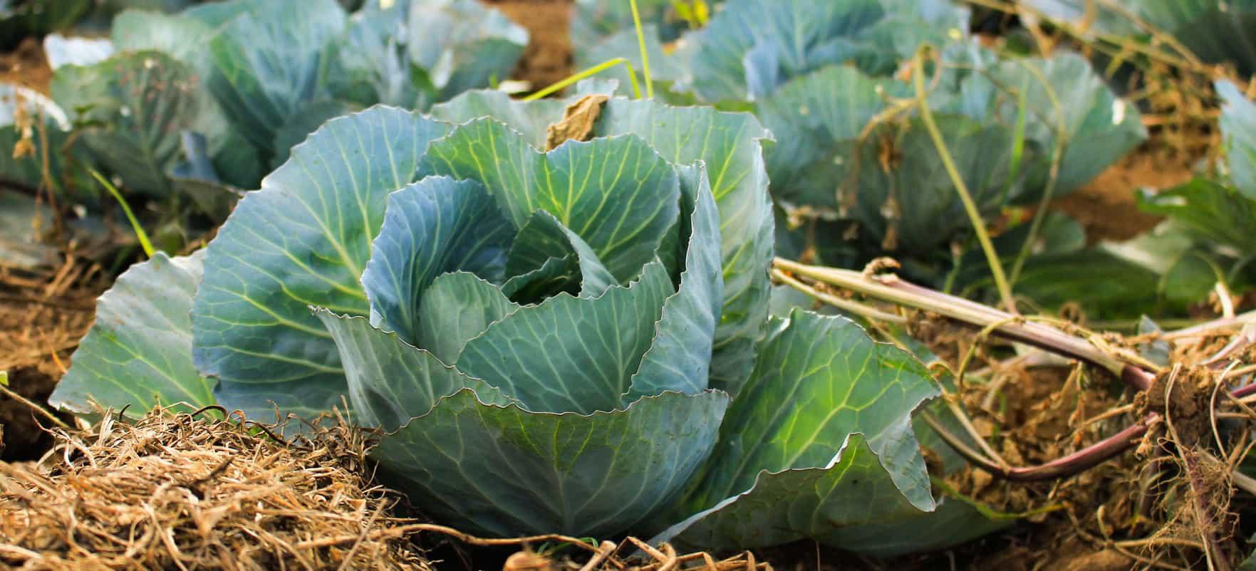 crop2